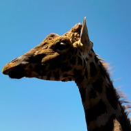 Lupa Zoo In Ludlow Massachusetts – A Kid Friendly Thing To Do Review