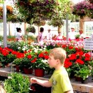 Flower Farm in Connecticut