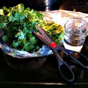Storing Cilantro To Keep It Fresh Longer