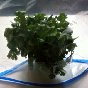 Here's How You Store Cilantro To Make It Stay Fresh Longer
