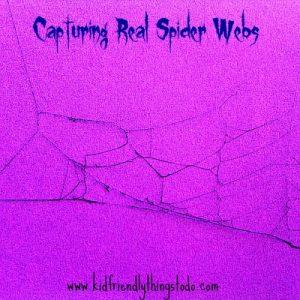 Capturing Real Spider Webs